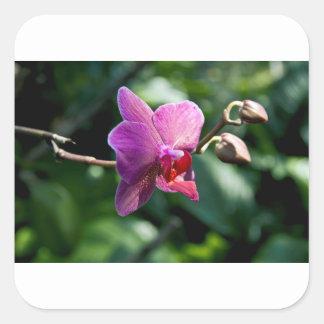 Orchidée magique sticker carré