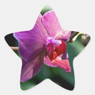 Orchidée magique sticker étoile