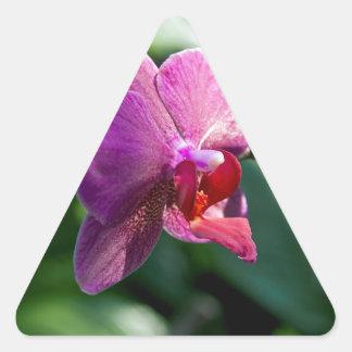 Orchidée magique sticker triangulaire