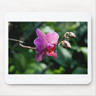 Orchidée magique tapis de souris