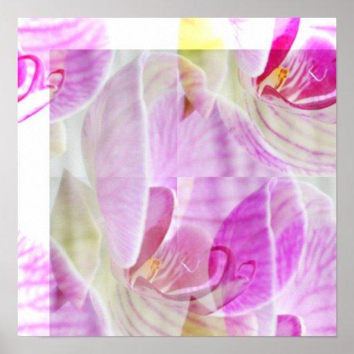 Orchidée sensible et belle florale posters