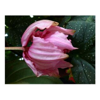 Orchidee s'est levé (orchidée rose) - la carte postale