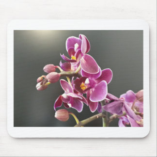 orchidée tapis de souris