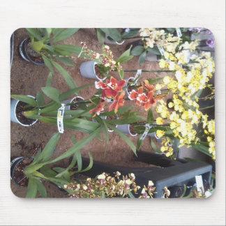 Orchidées à vendre tapis de souris