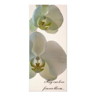 Orchidées blanches élégantes épousant le programme