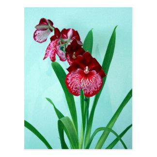 Orchidées de dames de danse carte postale