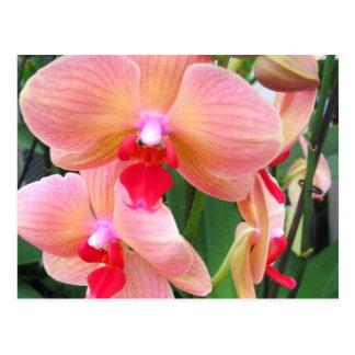 Orchidées de pêche - carte postale