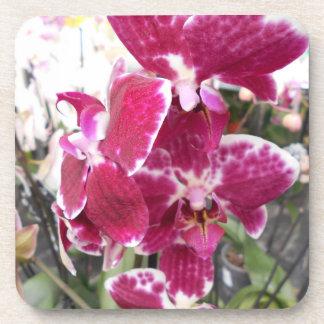 Orchidées éclaboussées pourpres de Phalaenopsis Dessous-de-verre