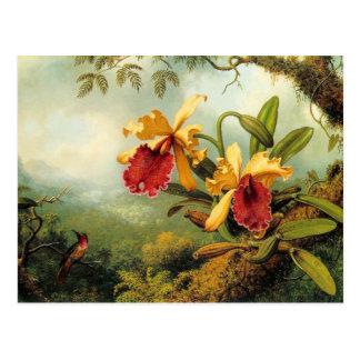 Orchidées et carte postale de colibris