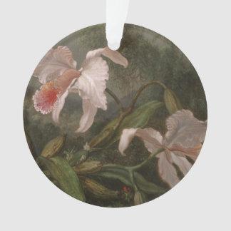 Orchidées et colibris de jungle