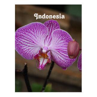 Orchidées indonésiennes cartes postales