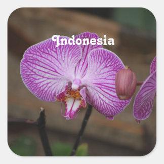 Orchidées indonésiennes sticker carré