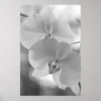 Orchidées noires et blanches affiches