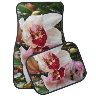 Orchidées roses de Dendrobium Tapis De Voiture