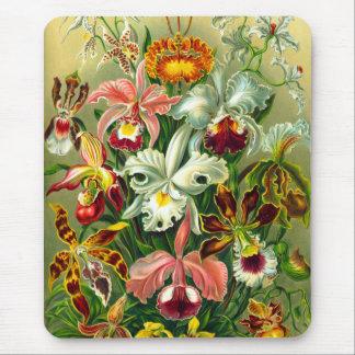 Orchidées Tapis De Souris