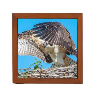 Organiseur De Bureau Balbuzard juvénile dans le nid