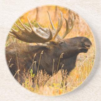 Orignaux (Alces d'Alces) Taureau dans les saules Dessous De Verres