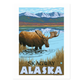 Orignaux buvant au lac - Skagway, Alaska Carte Postale
