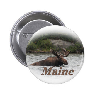 Orignaux du Maine Taureau Badge