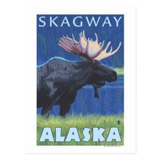 Orignaux la nuit - Skagway, Alaska Cartes Postales