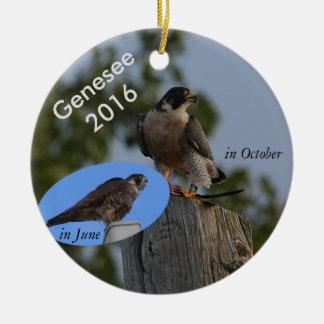 Ornement 2016 de Genesee - dans le plumage adulte