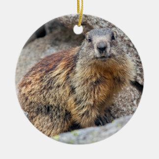 Ornement alpin de Marmot
