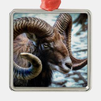 Ornement Carré Argenté Animal mammifère Mouflon du monde animal de nature