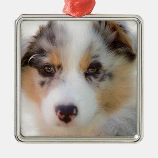 Ornement Carré Argenté Australian shepherd puppy