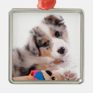 Ornement Carré Argenté Australian shepherd puppy