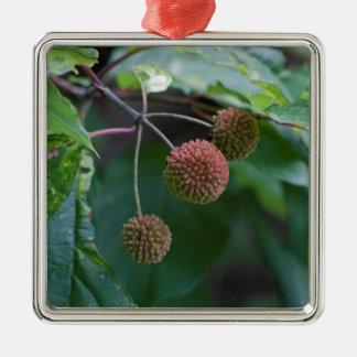 Ornement Carré Argenté Bourgeons de fleur sauvage de Bush de bouton
