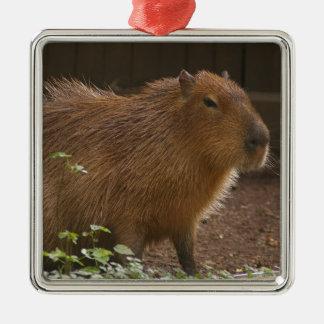 Ornement Carré Argenté Capybara