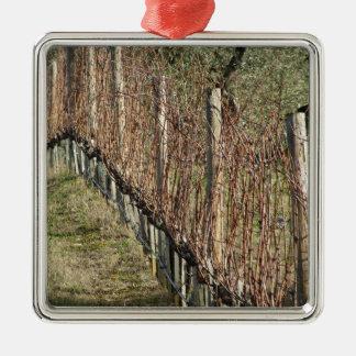 Ornement Carré Argenté Champ nu de vignoble en hiver. La Toscane, Italie
