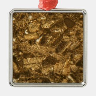 Ornement Carré Argenté Chaux miocène sous le microscope