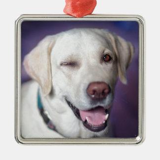 Ornement Carré Argenté chien