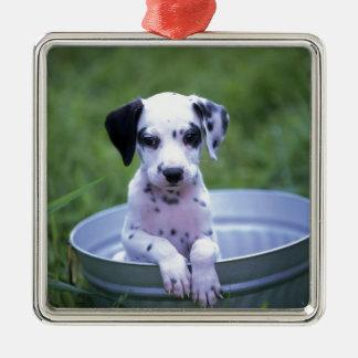 Ornement Carré Argenté Chiot dalmatien adorable attendant Bath