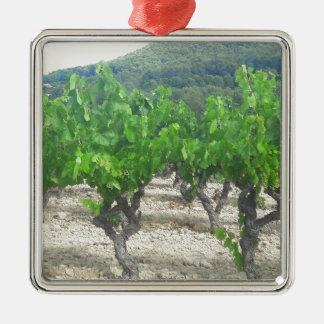 Ornement Carré Argenté Conception de vin