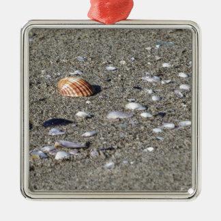 Ornement Carré Argenté Coquillages sur le sable. Arrière - plan de plage