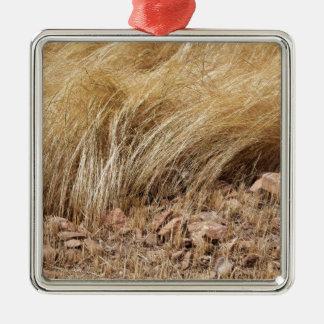 Ornement Carré Argenté Détail d'un champ de teff pendant la récolte