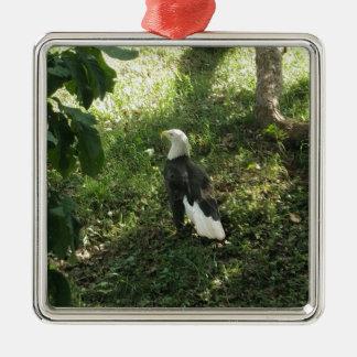 Ornement Carré Argenté . Eagle chauve nord-américain