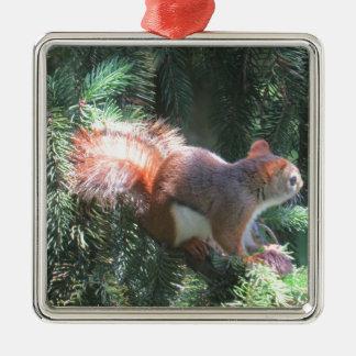 Ornement Carré Argenté Écureuil rouge