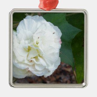 Ornement Carré Argenté fleur blanche de mutabilis de ketmie
