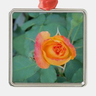 Ornement Carré Argenté fleur orange de rose jaune