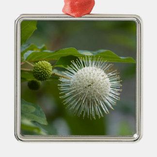 Ornement Carré Argenté Fleur sauvage blanc de Buttonbush