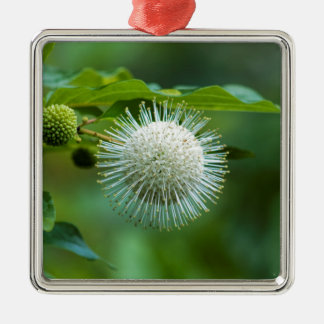Ornement Carré Argenté Fleur sauvage de Bush de bouton de l'Alabama