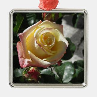 Ornement Carré Argenté Fleur simple de rose jaune au printemps