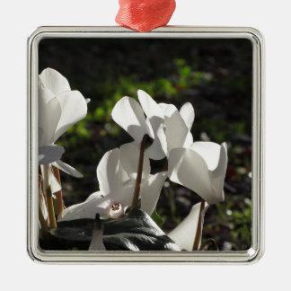 Ornement Carré Argenté Fleurs blanches de cyclamen de Backlits sur