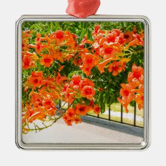Ornement Carré Argenté Fleurs de floraison d'orange sur fence.JPG