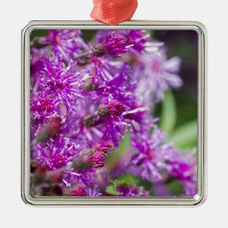 Ornement Carré Argenté Fleurs sauvages grands d'herbe de Saint-Jacques