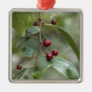 Ornement Carré Argenté Fruits d'un nerprun brillant de feuille