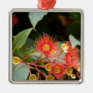 Ornement Carré Argenté Gomme fleurissante rouge (ficifolia de Corymbia)